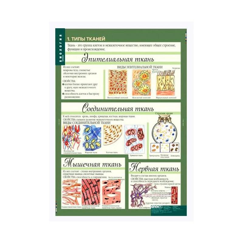 своей таблицы по биологии учебные картинки рубриках каждой фирмы